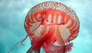 Medusa Luminiscente